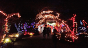 You Simply Have To See This Oregon Aquarium Decorated With Over 500,000 Christmas Lights
