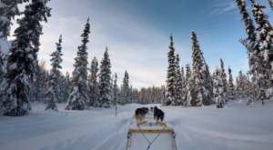 Take This Dog Mushing Tour For A Winter Adventure In Alaska