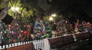 The Enchanting Display Near San Francisco With Over 600 Glittering Christmas Trees