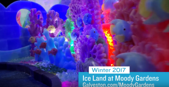 Moody Gardens 39 Ice Land Is The Best Holiday Attraction In Texas