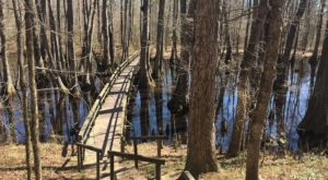 The Absurdly Beautiful Hike In Mississippi That Will Make You Feel At One With Nature