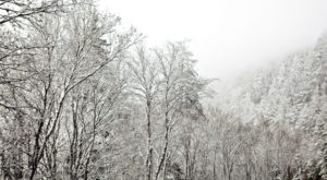 The One State Park In Tennessee That Transforms Into A Magical Winter Oasis Each Year