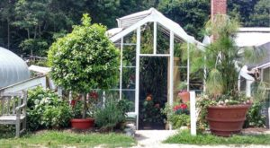 Visiting These 125-Year-Old Connecticut Greenhouses Is Like Entering An Exotic Fairy Tale