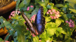 You'll Want To Plan A Day Trip To Milwaukee's Magical Butterfly House