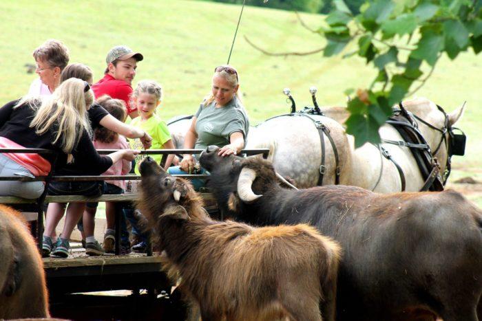 Lazy 5 Ranch Exotic Animal Safari In North Carolina Is ...