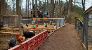 There's A Wildlife Park In Delaware That's Perfect For A Family Day Trip