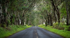 6 Positively Magical Tree Tunnels In Hawaii That Will Take Your Breath Away