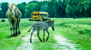 There's A Wildlife Park In Louisiana That's Perfect For A Family Day Trip