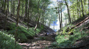 Hike Through A Canopy Of Trees On This Little Known Trail In Kentucky