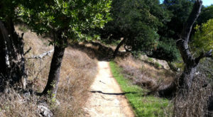 The Haunted Trail Near San Francisco That Will Scare You Silly