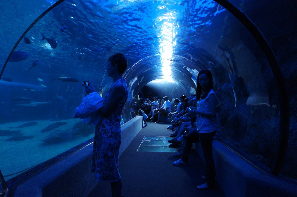 The Incredible Underwater Tunnel In Hawaii Where You Can