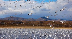 The One Time A Year This Wildlife Refuge In New Mexico Gets Taken Over By Unique Birds