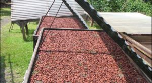 Once You Find This Secret Hawaii Chocolate Farm You'll Visit Again And Again