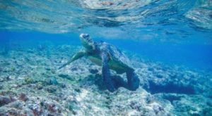 The One Stunning Place To See Sea Turtles Swim Here In The USA
