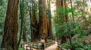 Social Media Is Destroying This West Coast Natural Treasure
