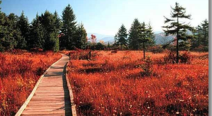 A Walk Through West Virginia's Cranberry Glades Is Like Walking On Another Planet
