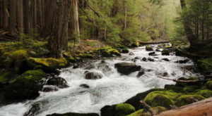 Escape To These 10 Hidden Oases In Washington To Find Peace And Quiet
