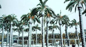 It Snowed This Week In Florida And These 9 Photos Capture It All