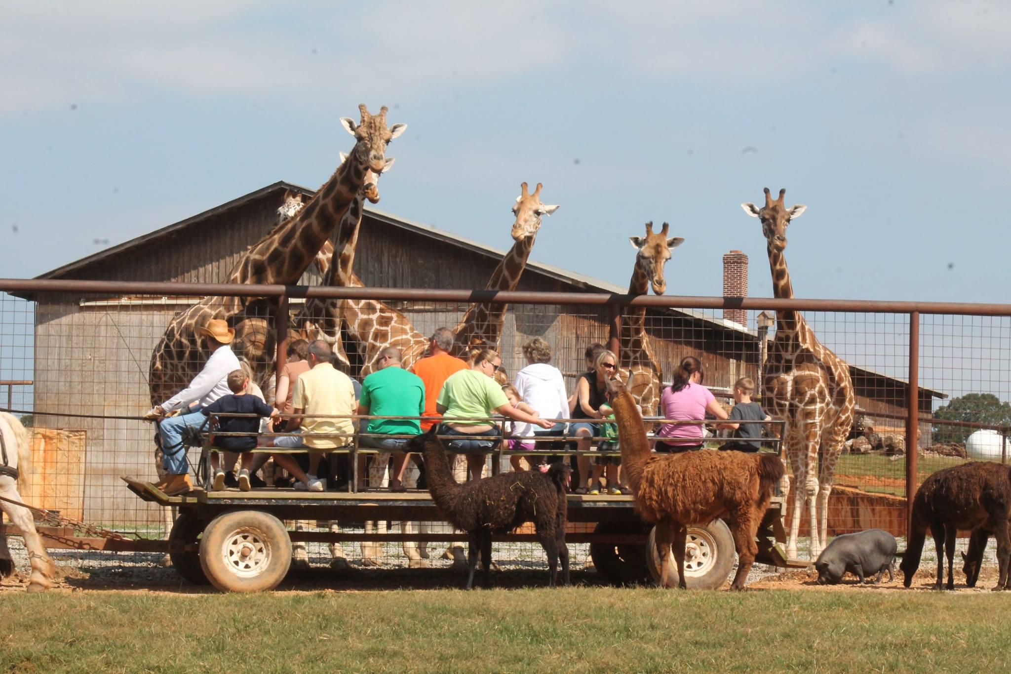 Lazy 5 Ranch Exotic Animal Safari In North Carolina Is