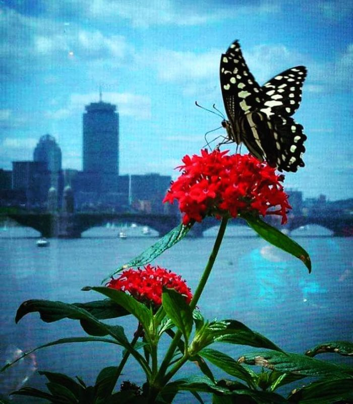 While Not Large, You Canu0027t Beat The Location And Views From This Butterfly  Garden.