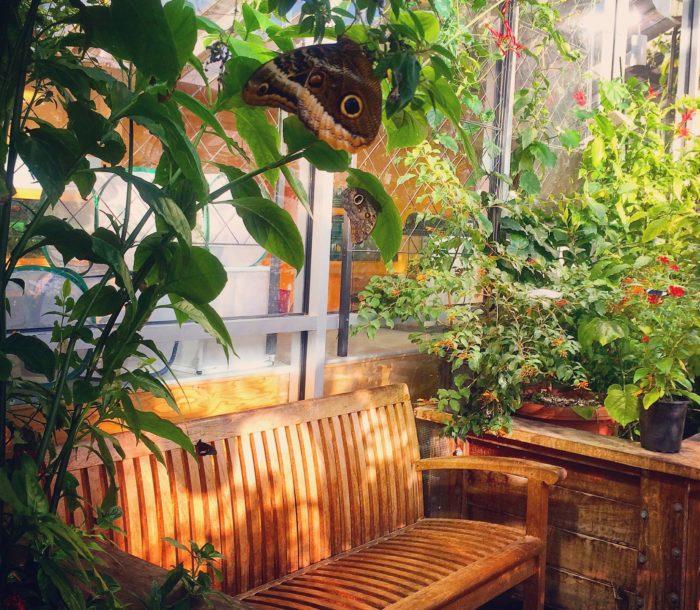 Bon Arboretums Husetts L Boston Gardens. Butchart Butterfly Gardens