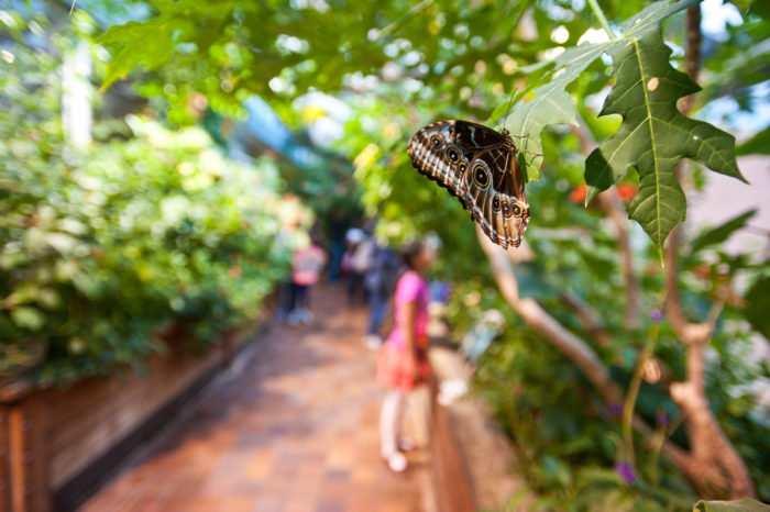 Once In The Garden, Free Flying Butterflies Flit About Overhead. Youu0027ll  Have The Chance To Spot Local Species From New England.