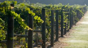 These 8 Enchanting Destinations In Alabama Are Perfect For Wine Lovers