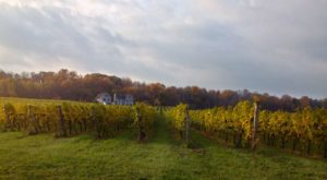 The 7 Most Beautiful Wineries Around Buffalo