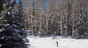 There's A Truly Enchanted Forest In New Mexico And It's Perfect For A Winter Hike