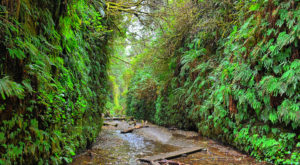 This Quaint Little Trail Is The Shortest And Sweetest Hike In Northern California