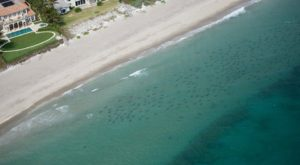 Thousands Of Sharks Are Swimming Just Offshore Of Florida And The Footage Is Astounding