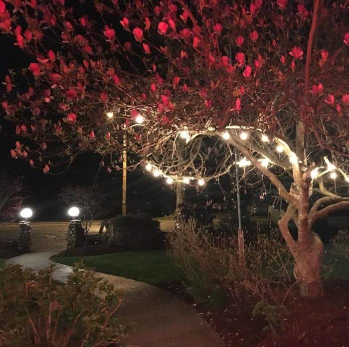chuckanut lighting. Chuckanut Manor Has Had The Same Owners, Pat \u0026 Lois Woolcock, Since 1975. Lighting