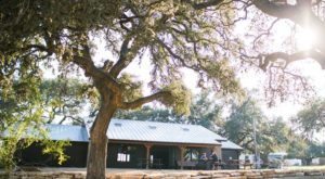 This Gorgeous Restaurant Near Austin Is Surrounded By A Lovely Oak Tree Oasis