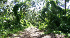 10 Amazing Florida Hikes Under 3 Miles You'll Absolutely Love