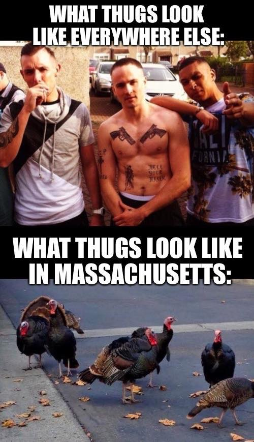15 Funny Memes And Jokes About Massachusetts