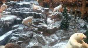 A Mountain Full Of Wild Animals Is Hiding Right Inside This Connecticut Store