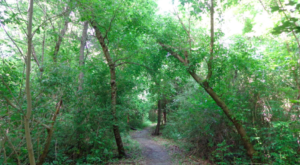 This Quaint Little Trail Is The Shortest And Sweetest Hike Near New Orleans