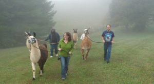 Virginia's Scenic Bed & Breakfast Where Guests Can Go Llama Trekking