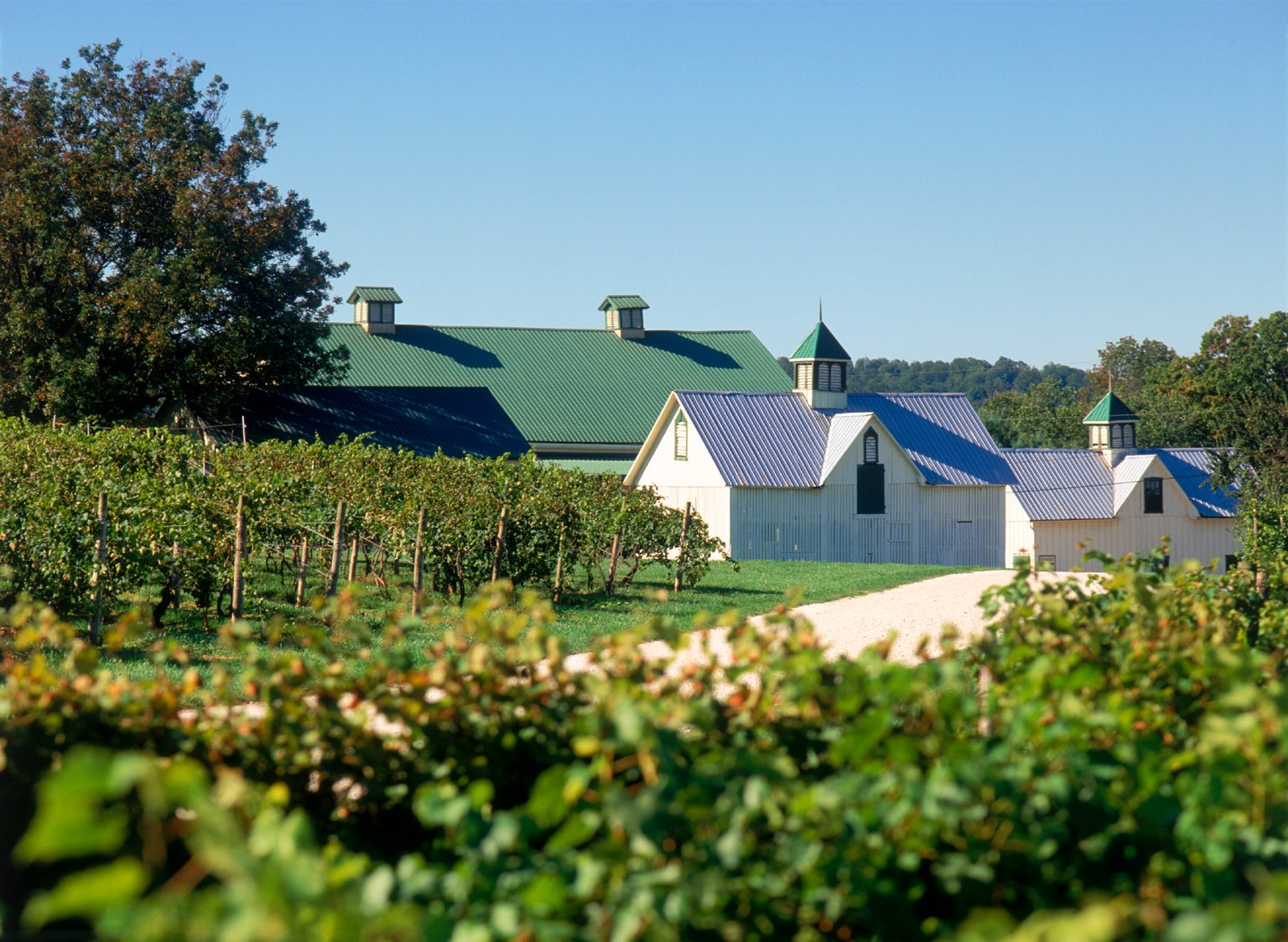 Stone Mountain Winery Is The Best Winery Near Washington