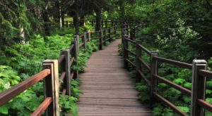 This Quaint Little Trail Is The Shortest And Sweetest Hike In Minnesota