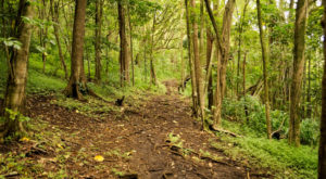 This Quaint Little Trail Is The Shortest And Sweetest Hike In Hawaii