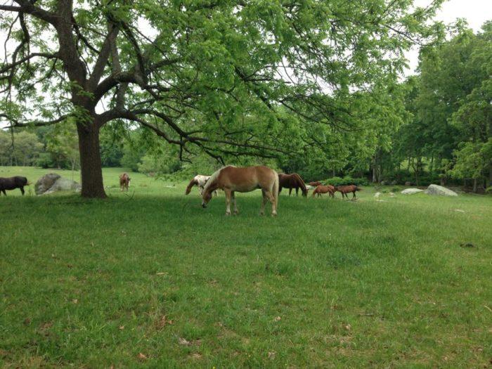 Confederate Trails Horse Tours