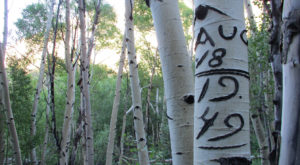This Secret Forest In Nevada Is Full Of Mysterious And Beautiful Markings