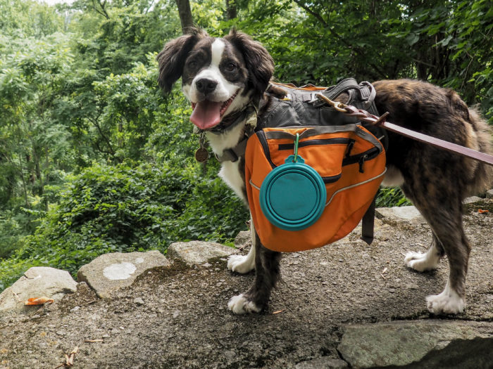 Can Dogs Hike Up Stone Mountain