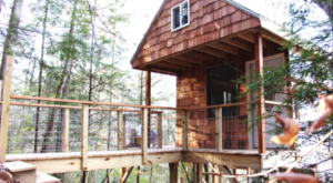 Sleep In The Trees Just Steps From The Best Of Kentucky's Red River Gorge