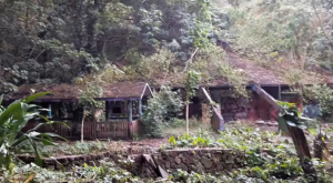 Everyone In Hawaii Should See What's Inside The Gates Of This Abandoned Zoo