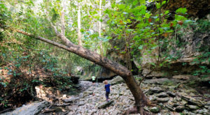 8 Of The Greatest Hiking Trails On Earth Are Right Here In Austin