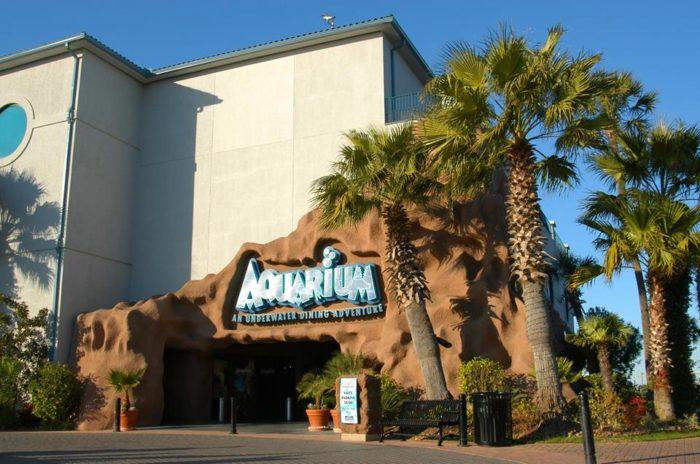 The Kemah Aquarium Is The Most Unique Ocean Themed