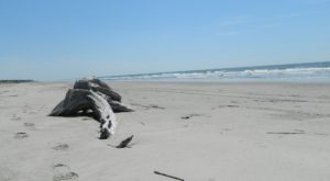 The Amazing South Carolina Beach You Can Only Get To By Boat