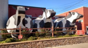 The Cheese Factory Tour In North Carolina That's Everything You Could Imagine And More
